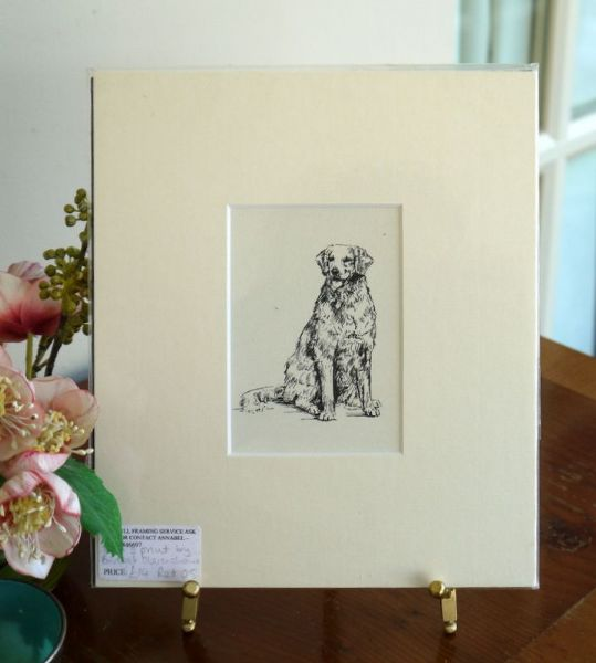 Retriever - sitting - Ret O5 -  1960's print by Bridget Olerenshaw